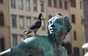jak chránit sochy před holuby