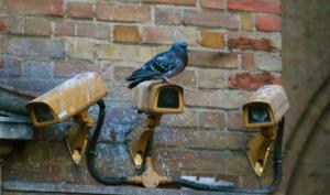 holubí trus