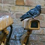 hubeni-holubu