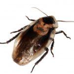 jak se zbavit švábů
