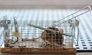 pastička na myši